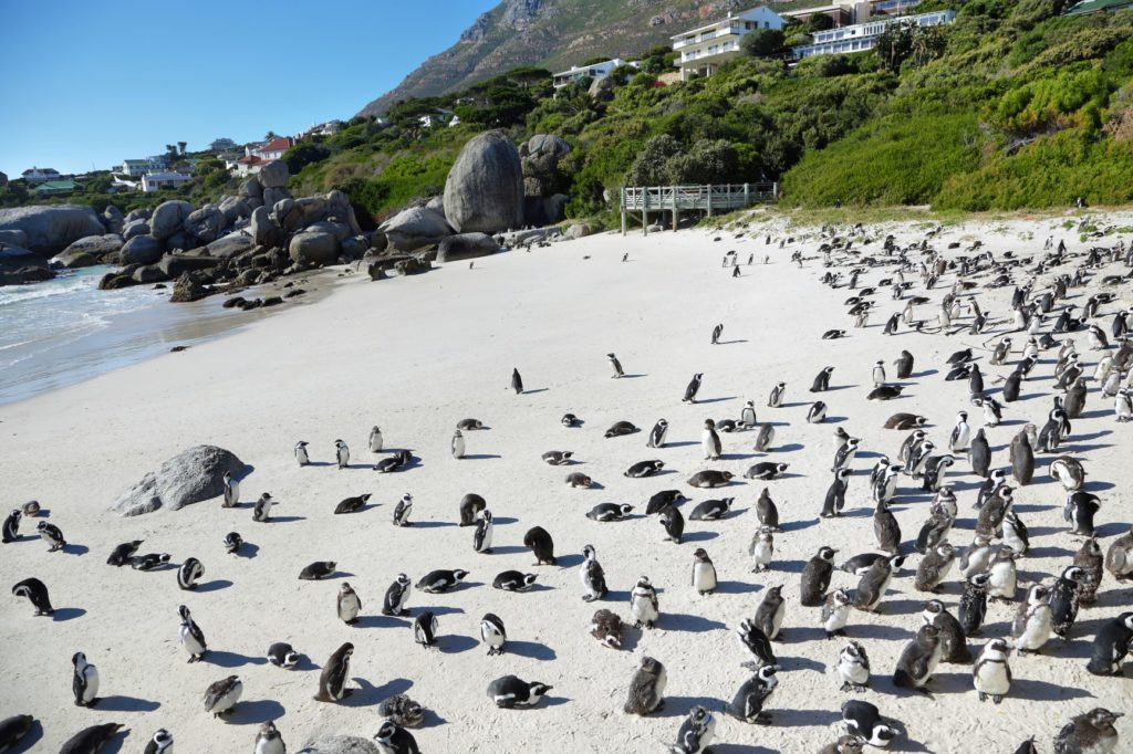 Boulders Beach named amongst the best beaches in the world!